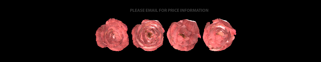 please contact Andrea for price information